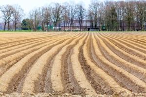 Asparagus field (image copyright Ewais and Shutterstock 2015)